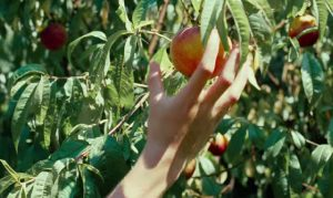 Call Me By Your Name_peach